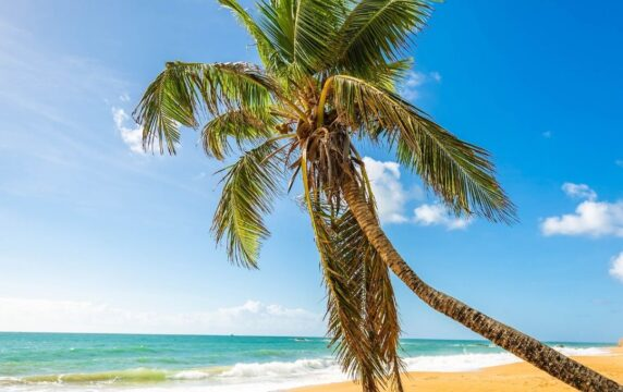 Puerto Rico 14U Softball Trip – Winter 2021